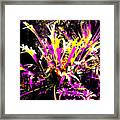 Outburst Framed Print by Eikoni Images