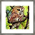 Owl From Butterfingers And Secrets Framed Print by Morgan Fitzsimons