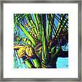 Palm Tree At Sunset Framed Print
