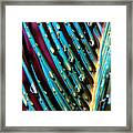 Palms After A Rainy Day Framed Print