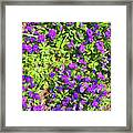 Patch Of Pansies Framed Print