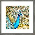 Peacock Paradise Framed Print