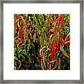 Peppers - Red Framed Print