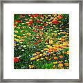 Poppy Petal Patch Framed Print