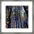 Phil's Trees Framed Print
