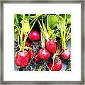 Picked Just For You Framed Print