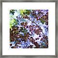 Pine Cone Heaven Framed Print