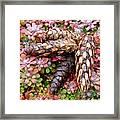 Pine Cones Art Print Botanical Garden Baslee Troutman Framed Print
