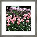 Pink And Mauve Tulips Framed Print