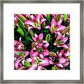 Pink And White Lilies Framed Print