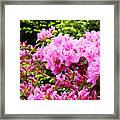 Pink Azalea Flowers Landscape 11 Art Prints Canvas Artwork Framed Art Cards Framed Print