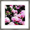 Pink Blossoms Framed Print