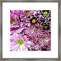 Pink Flower Carpet Framed Print
