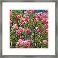 Pink Flowering Shrub Framed Print