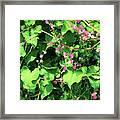 Pink Flowering Vine2 Framed Print