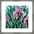 Pink Orchids Framed Print