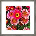 Pink Patterned Mums Framed Print