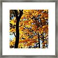 Pitchfork In Autumn Light Framed Print