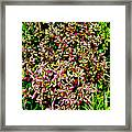 Plant Power 4 Framed Print by Eikoni Images