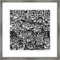 Plants Of Black And White Framed Print