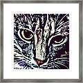 Face Of The Feline Framed Print