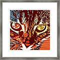 Eyes Of The Kitty Framed Print