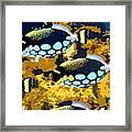Pop Fish Framed Print