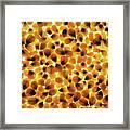 Popcorn Seeds Framed Print
