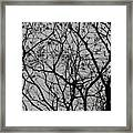 Popcorn Tree Budding Framed Print