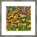 Poppies And Lupines Framed Print