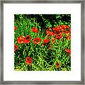 Poppies Flowerbed Framed Print