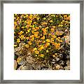 Poppies On The Rocks Framed Print