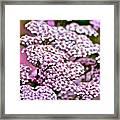 Pretty Pink Framed Print