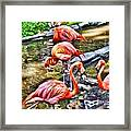 Pretty Pink Flamingos Framed Print