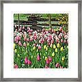 Pretty Tulips Garden Framed Print