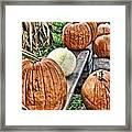 Pumkins In A Row Framed Print