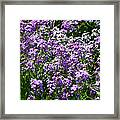 Purple And White Framed Print