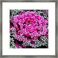 Purple Cabbage Framed Print