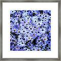 Purple Carpet Framed Print