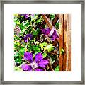 Purple Clematis On Trellis Framed Print