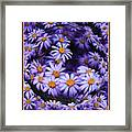 Purple Daisy Abstract Framed Print