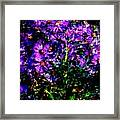 Purple Flower Still Life Framed Print