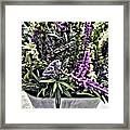Purple Flowers In Bloom Framed Print