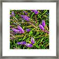 Purple Flowers Of Chiloe Framed Print