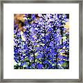 Purple Haze Framed Print by Karen M Scovill