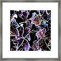 Purple Ivy Framed Print