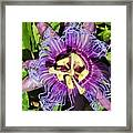 Purple Passion Flower Framed Print