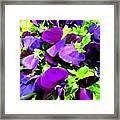 Purple Petals Framed Print