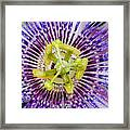 Purple Radial Framed Print