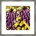 Purple Sunflower Seeds Framed Print